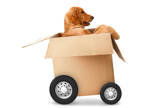 Moving with Pets - Toronto Moving Company